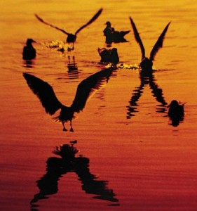 birds_sunset